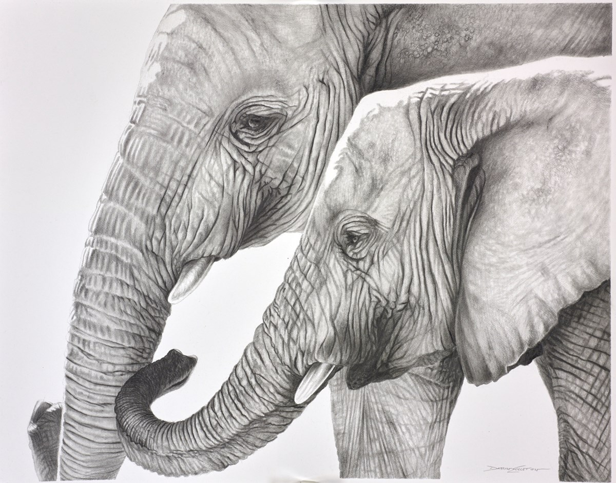 Elephants Study by darryn eggleton -  sized 14x11 inches. Available from Whitewall Galleries